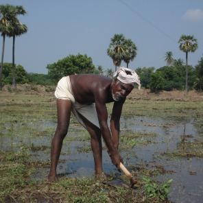 Organic farming beneficiary of SHAPE