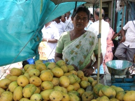Fruit Business for Mrs. Kannamal